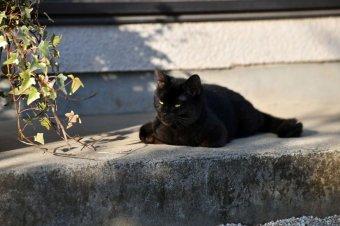 貓咪知道但是貓咪不說劇照
