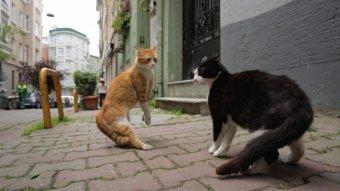愛貓之城劇照