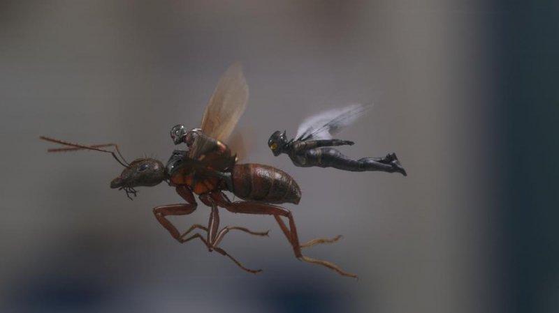 蟻人與黃蜂女劇照