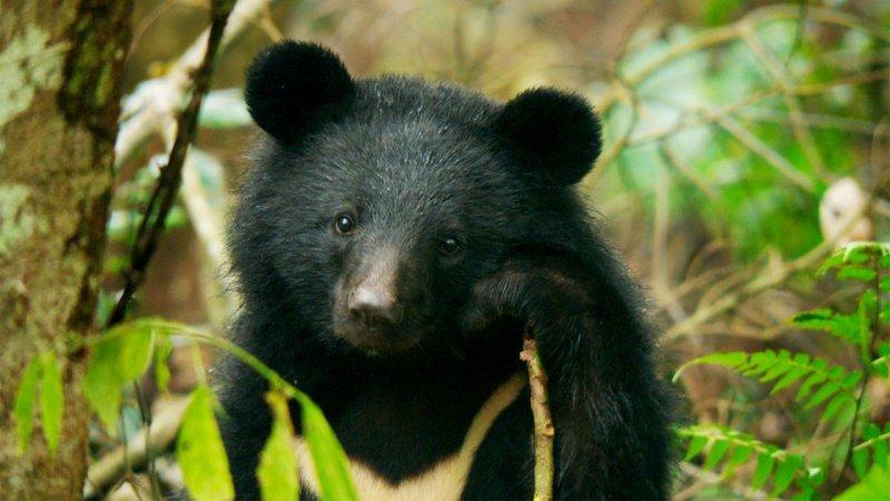 黑熊來了劇照