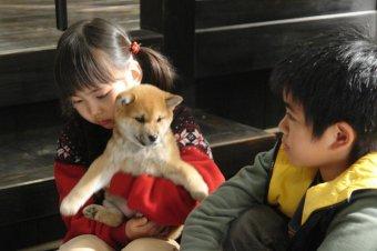 心動奇蹟:瑪莉與3隻小狗的故事劇照