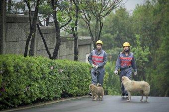 活路:妒忌私家偵探社劇照