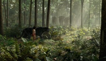 與森林共舞劇照