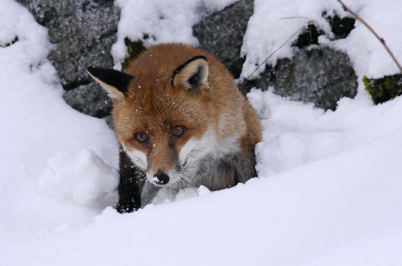 狐狸與我劇照